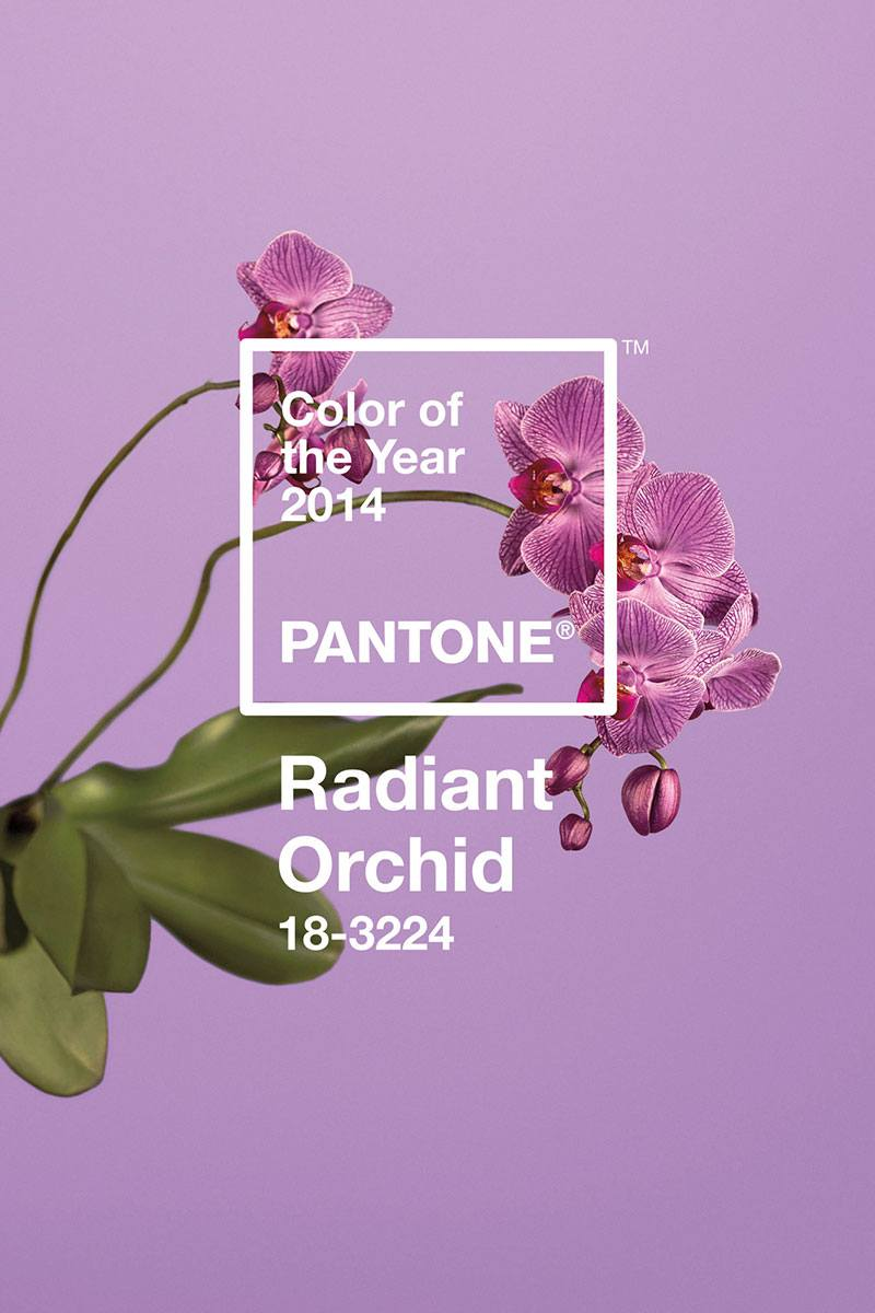 Pantone color of the year 2014 Radiant Orchid - Carrie Loves Blog