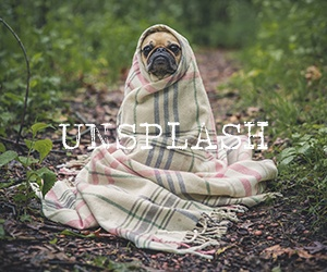 Unsplash - Carrie Loves Resources
