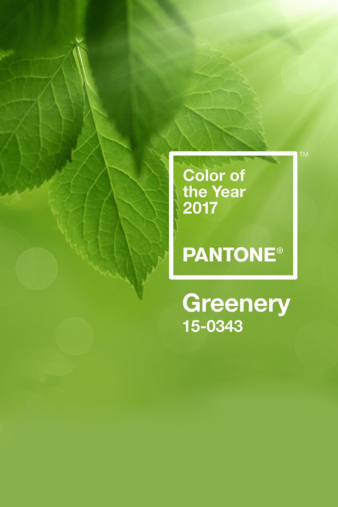 Pantone color of the year 2017 carrie loves for Color of the year 2016